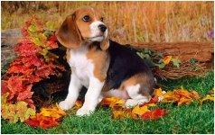 Autumn Dog.JPG