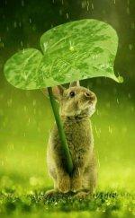 rabbit in rain.JPG