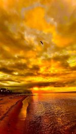 Wingsday by Christopher George.JPG